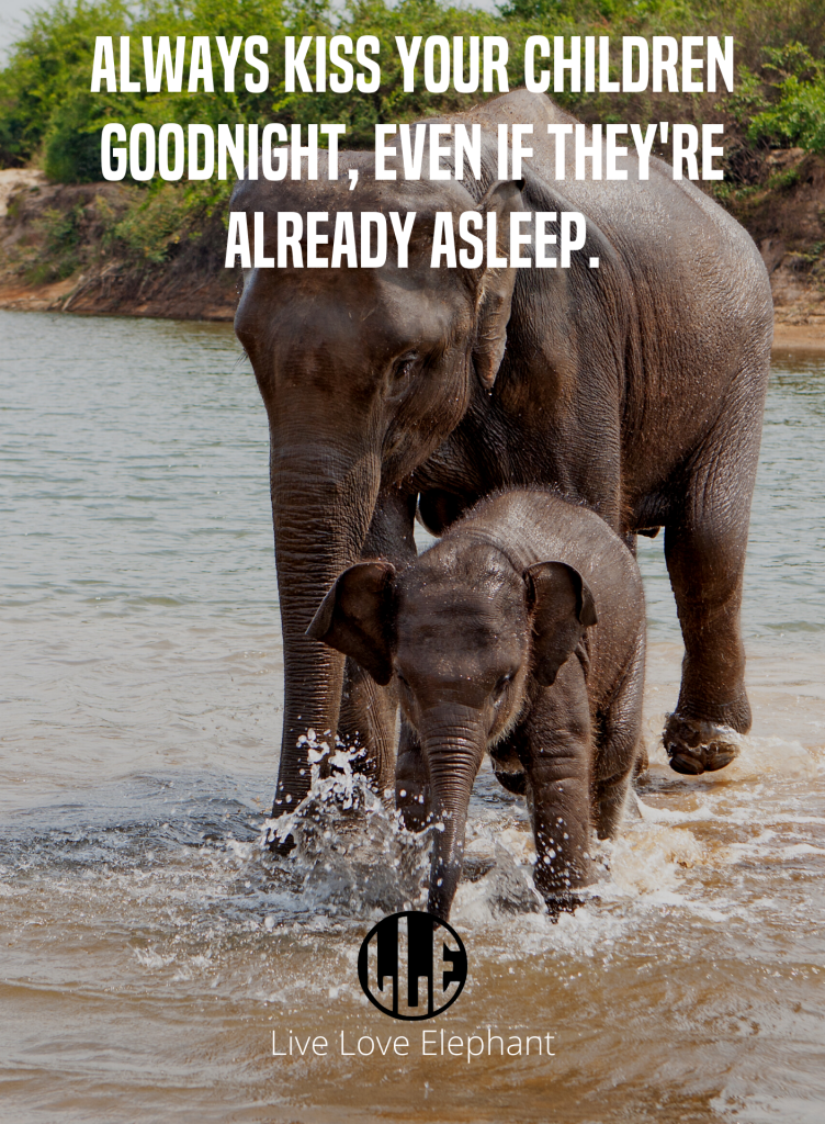 LE - Always kiss your children goodnight, even if they're already asleep.