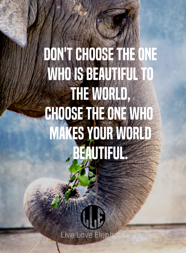 LLE - Don't choose the one who is beautiful to the world, choose the one who makes your world beautiful.