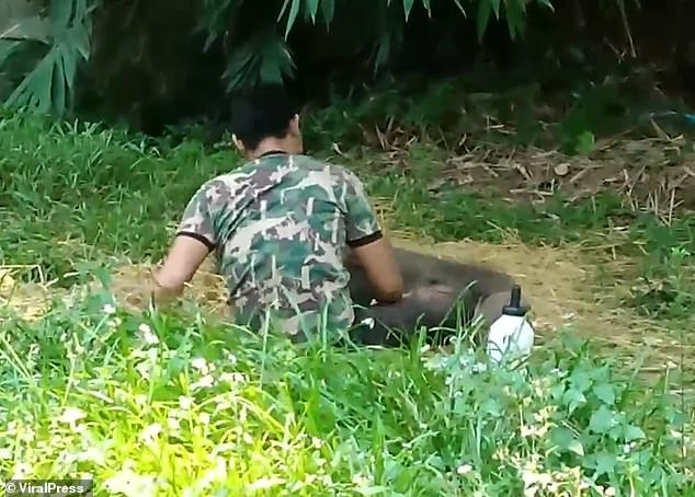 Orphaned baby elephant returns to lay on carer lap after releasing to the wild 6
